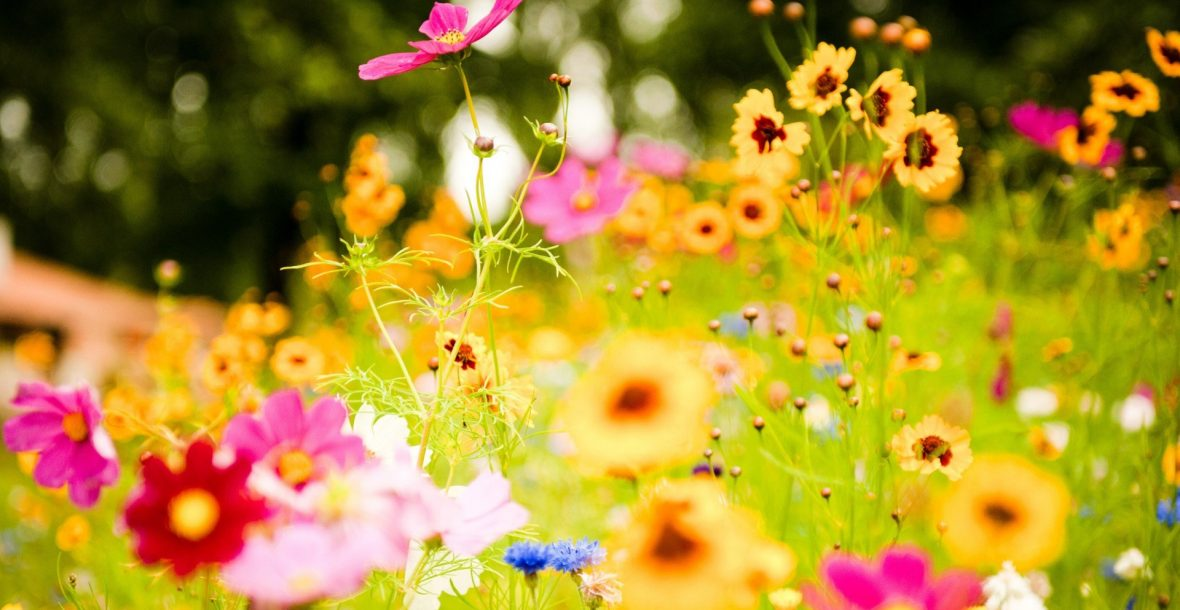 Spring-Flowers-HD-Picture